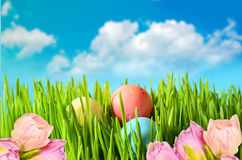 Colored easter eggs on green grass Stock Photos