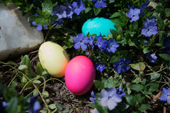 Colored Easter eggs hidden on lawn among purple flowers and grass Stock Photo