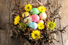 Colored easter eggs in nest Royalty Free Stock Images