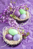 Colored easter eggs in nests. Violet, purple and green easter eggs with spring flowers Stock Photography