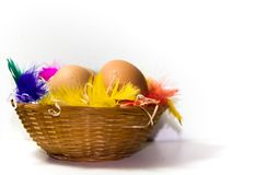 Easter basket with eggs and colorful feathers on white background. Colored easter eggs and nests with colored feathers royalty free stock photo