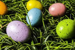 Colored Easter Eggs in Green Grass Stock Images