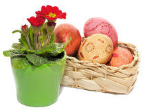 Colored Easter Eggs and primula flowers Royalty Free Stock Image