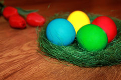 Colored easter eggs and red tulips Stock Photo