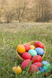 Colored eggs. Basket of colored eggs on grass outside Royalty Free Stock Images
