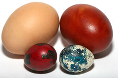 Colored eggs. Four chicken and quail colored eggs Royalty Free Stock Photo