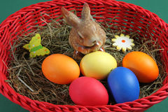 Colored eggs in a basket Stock Photos