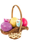 Colored eggs in easter basket Royalty Free Stock Image