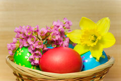 Colored  eggs  laying in wood basket Royalty Free Stock Photo