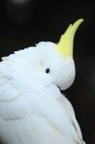 Colored Elegant Parrot Bird Royalty Free Stock Photos