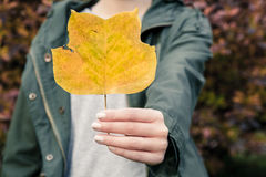 Colored fall leave Stock Photo
