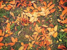 Colored fallen leafs Stock Photo