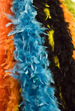 Colored feather Stock Images