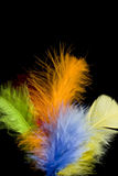 Colored feather Royalty Free Stock Images