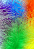 Colored feathers. Background of colored feathers - detail Stock Photography
