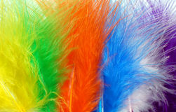 Colored feathers. Background of colored feathers - detail Royalty Free Stock Photos