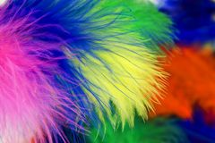 Colored feathers Royalty Free Stock Photos