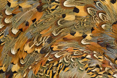 Colored feathers Stock Image