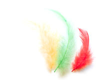 Colored feathers. Yellow, green and red feathers isolated on a white background Stock Photos