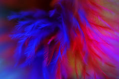 Colored feathers abstract background Royalty Free Stock Image