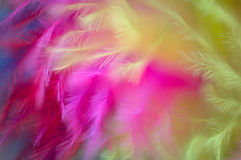 Colored feathers abstract background Stock Images