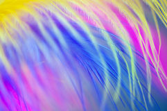 Colored feathers abstract background Stock Photos