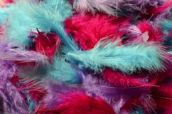 Colored feathers background Stock Photo