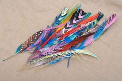 Colored Feathers Stock Photo