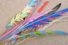 Colored Feathers Royalty Free Stock Images
