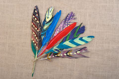 Colored Feathers Royalty Free Stock Photography