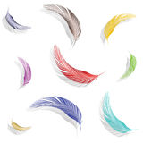 Colored feathers collection Stock Photos