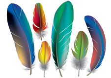 Colored feathers. Contains transparent objects. EPS10 Royalty Free Stock Image