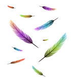 Colored feathers falling background Stock Image