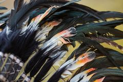 Colored feathers from a native american headdress.  royalty free stock images