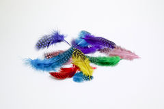 Colored feathers. Spilled on white background Royalty Free Stock Photo