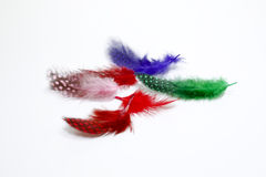 Colored feathers. Spilled on white background Stock Photo