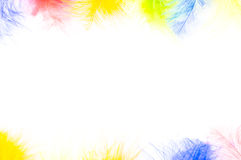 Colored feathers background. Colored feathers on white background Royalty Free Stock Images