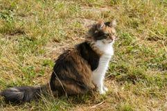 Colored female cat Stock Image