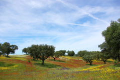 Colored field in alentejo in the Spring. Royalty Free Stock Photo