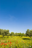 Colored field scene Royalty Free Stock Photography