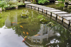 Colored fish in the artificial river. Royalty Free Stock Photos
