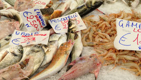 Colored fish Stock Photography