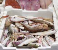 Colored fish at market Royalty Free Stock Photo