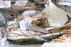 Colored fish Stock Photo