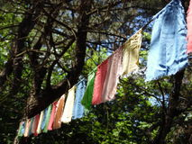 Colored flags string. Rope with hanging colorful festival flags strung between trees in the forest Royalty Free Stock Image