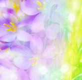Colored floral background Stock Photos