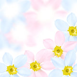 Colored flower background Stock Photo