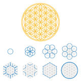 Colored Flower of Life development Stock Photo