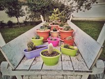 Colored flowerpots with cactus inside Royalty Free Stock Photo