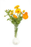 Colored flowers. Isolated on white Stock Photography